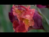 «ЦВЕТЫ.» под музыку Элтон Джон - Can you feel the love tonight (Король Лев). Picrolla